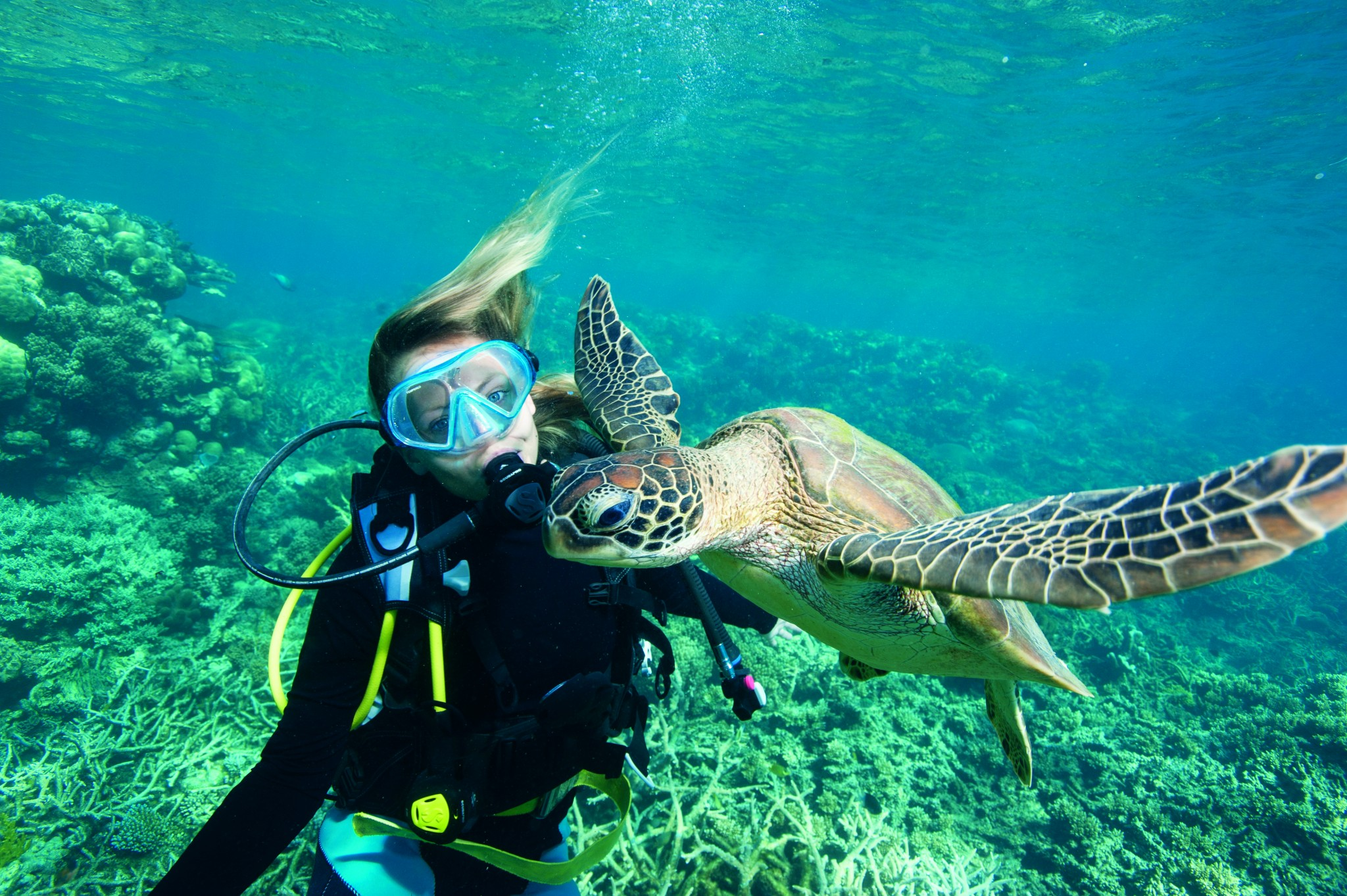4_diving_with_turtle_.jpg
